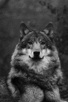 powerful & beautiful animal