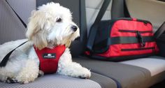 Safe travels! Don't forget to buckle up your furry pals!