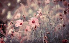 Fond d'écran hd : fleurs des champs