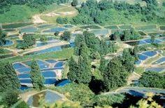 新潟県長岡市の山古志地区の棚田は一度は絶対に見に行って欲しい絶景 全国に棚田はあるけどここの棚田は範囲も広くて圧巻です() ここに行くなら田植えが終わった頃がベストシーズン 錦鯉の稚魚が放されて1年で一番キレイな風景に出会えます() tags[新潟県]