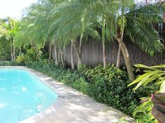 I would have different plants, but bamboo fencing is perfect for privacy and tropical landscaping.