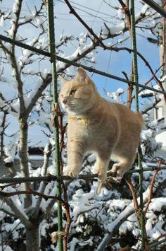 Cats (136 photos) (92)
