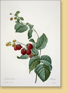 Joel Oppenheimer Audubon and Natural History Prints