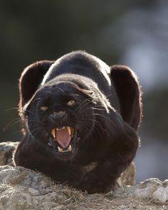 Breathtaking Close-Up Portraits of Wild Animals by Serhat Demiroglu #photography