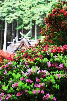 一宮神社(丹波市氷上町上成松)2013.5.7 【TanbaPhotoclub】 #tanba