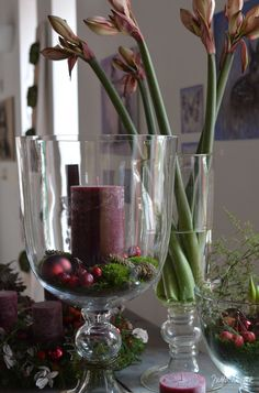 Jutta Nowak: Advent exhibition glass cups with candles and amaryllis - Modern Kitchen Ornaments, Most Beautiful Gardens, Deco Floral, Bouquet, Diy Candles, Winter Garden, Christmas Inspiration, Holidays And Events, Seasonal Decor