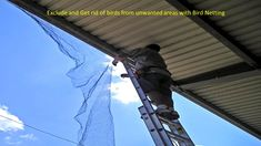 Bird Netting installation services in Bangalore and Mumbai. Hicare specializes in anti-bird netting services by Trained Experts. We offer Special HDPE net quality. Get high-quality anti-bird netting for your residential building. Call us now at 39889988 Bird Netting, Pest Control, Pigeon, Mumbai, Rid, Building, Nest, Industrial, House