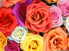 Flower Wallpaper Background, HD Wallpaper, Beautiful Wallpaper, Download Background Desktop