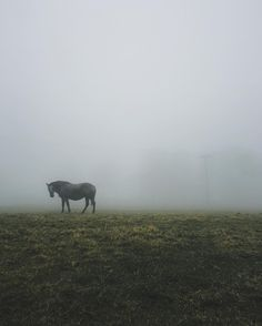 Beautiful iPhoneography by Sara Tasker Mobile Photography, Fine Art Photography, Instagram Influencer, Beautiful Creatures, Lightroom, Beautiful Pictures, Horses, Instagram Posts, Search
