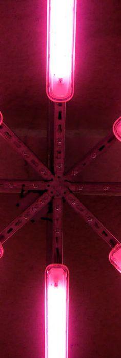 neon pink lights