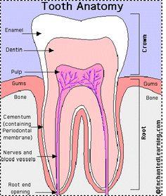Knowing Dental Hygienist Health … - Sante Dentaire Dental Assistant Study, Dental Hygiene Student, Dental Humor, Dental Hygienist, Dental World, Dental Life, Teeth Health, Dental Health, Oral Health