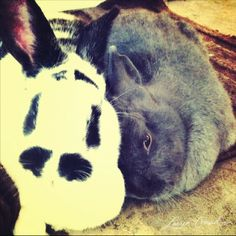 This is weird, it looks exactly like my rabbits Alice and Frank....the parents of my 20 other rabbits that I had.