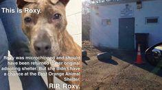 Petition · City of East Orange, NJ: Address Inhumane Animal Shelter Conditions · Change.org