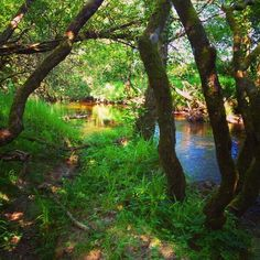 Summer by the river. Ireland, Country Roads, River, Plants, Summer, Outdoor, Outdoors, Summer Recipes, Irish