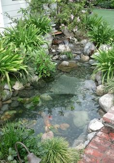 This pond is not made for large koi but is fine for goldfish and other critters