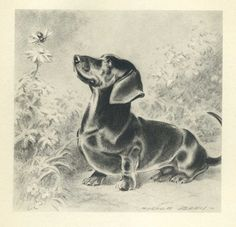 Curious DACHSHUND Vintage 1940s Dog Print Morgan Dennis Art or CAIRN Terrier and Friend on other side Print 40. $12,50, via Etsy.