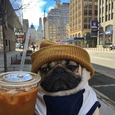 Imagem de dog, coffee, and pug