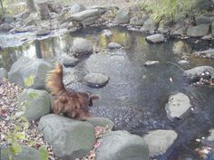 Timmy is about to make a big splash! This photo, submitted by Joan Clancy, won a TAILS 'Weekend Pets' photo contest.