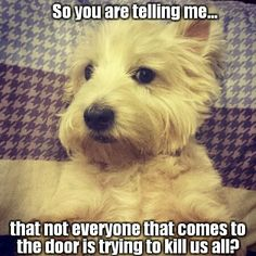 For every Westie out there
