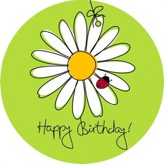 Birthday daisy & lady bug