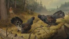 """The Fighting Capercaillies"" / ""Taistelevat metsot"", 1886 -oil on canvas- Ferdinand von Wright - Ateneum Finland Forest Scenery, Google Art Project, Ferdinand, Wildlife Art, Vincent Van Gogh, Art Google, Finland, Art Museum, Art History"