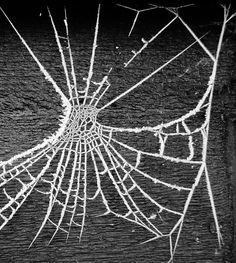 frozen spider web by turkey plucker flickr