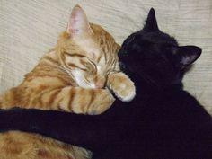 仲良し兄弟  猫の画像 猫ギャラリー