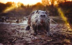 Daily Dozen for Nov. 6, 2015 — Photos -- National Geographic Your Shot