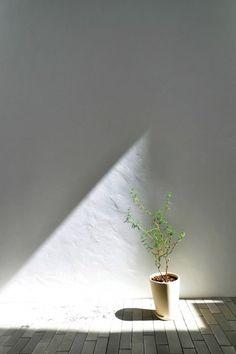 時間帯によって壁につくり出される光の造形。この形が変わっていくのを追うのも楽しみ。