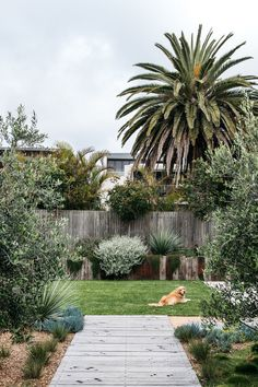 Desert landscaping is different than other styles of landscape designs because it requires the use of desert plants. This refers … Coastal Gardens, Beach Gardens, Outdoor Gardens, Australian Garden Design, Australian Native Garden, Outdoor Landscaping, Front Yard Landscaping, Landscaping Ideas, Coastal Landscaping