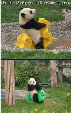 This Panda rocks my world - http://goo.gl/0Yyas9