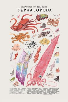 Creatures of the order Cephalopoda   Etsy