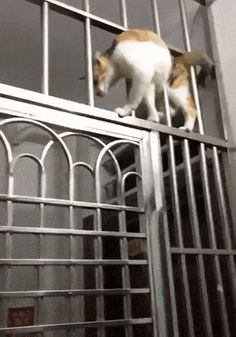 Cat Knows No Obstacles