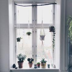 indretning med hængeplante - Google-søgning