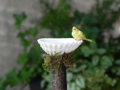Miniature Fairy Garden  Birdbath with  bird - shell bird bath