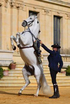 ¿Has visto cómo bailan los caballos andaluces? / Have you seen how the Andalusian Horses dance?