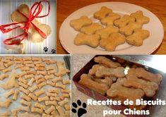 Les chiens eux aussi ont droit à leurs petites friandises en dehors des repas. Pour lui faire plaisir ou en guise de récompense, offrez à votre chien un biscuit délicieusement aromatisé. Découvrez plusieurs recettes de biscuits pour chiens faits maison... Pet Treats, Australian Shepherd, Gingerbread Cookies, Coco, Dog Cat, Homemade, Desserts, Matou, Beagles