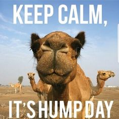 Happy Hump Day Quotes Cool Happy Hump Day  Holiday Fb Posts  Pinterest  Wednesday Humor