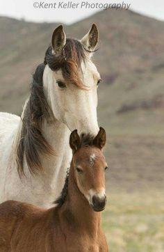 Kent Keller photography wild Mustangs