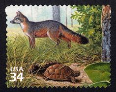 Gray Fox and Gopher Tortoise, a US .34¢ stamp issued April 26, 2002