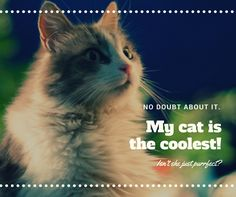 NO DOUBT ABOUT IT. My Cat is the coolest? Isn't she just purrfect?? Tag a friend who would love this!    Which one is your favorite?    Visit here : https://eratoshop.us    #catzazy #animalprint #nature #petoftheday #petscorner #animalkingdom #animalsofinstagram #petsofinstagram #pets_of_instagram #animales #petsagram #animals