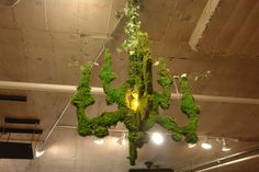 Chandelier by Mosstika - DIY: Blend one can of cheap beer (or 1 1/2 cups buttermilk), a few handfuls of moss, one teaspoon of sugar. Paint on and mist daily until it grows.