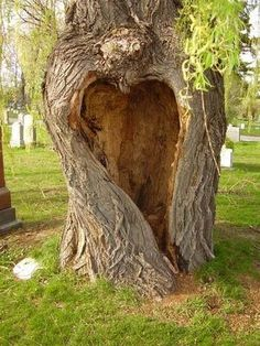 Hollowed heart on tree trunk