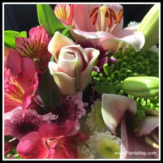 Thank you for visiting our pinterest board #Valentines Day is for #Flowers. If you love flowers you should also visit www.PlantsMap.com