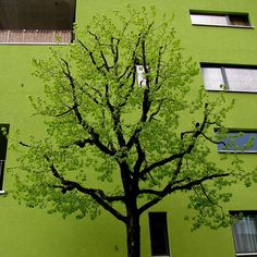 green on green~~~~I am so impressed..it looks like a fabulous painting on the side of the building..'photographic art'!! special!