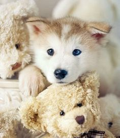 Puppy and teddy - best friends.