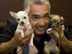 Cesar millan, the dog whisperer uses a range of dog training techniques to change a dog's behavior. Description from creativeyouthmedia.com. I searched for this on bing.com/images