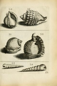 Recreatio mentis et oculi in observatione animalium testaceorum : - Biodiversity Heritage Library