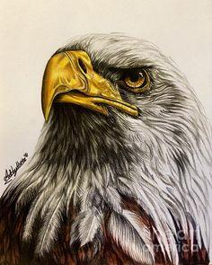 Bald Eagle by Art By Three Sarah Rebekah Rachel White Bird Drawings, Cool Art Drawings, Art Drawings Sketches, Animal Drawings, Drawings Of Eagles, Eagle Images, Eagle Pictures, Eagle Artwork, Eagle Face