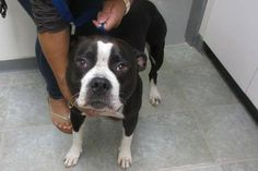 Lost Dog Two Lost Dogs Seen In Framingham Found Dogs Ma Pinterest Dog